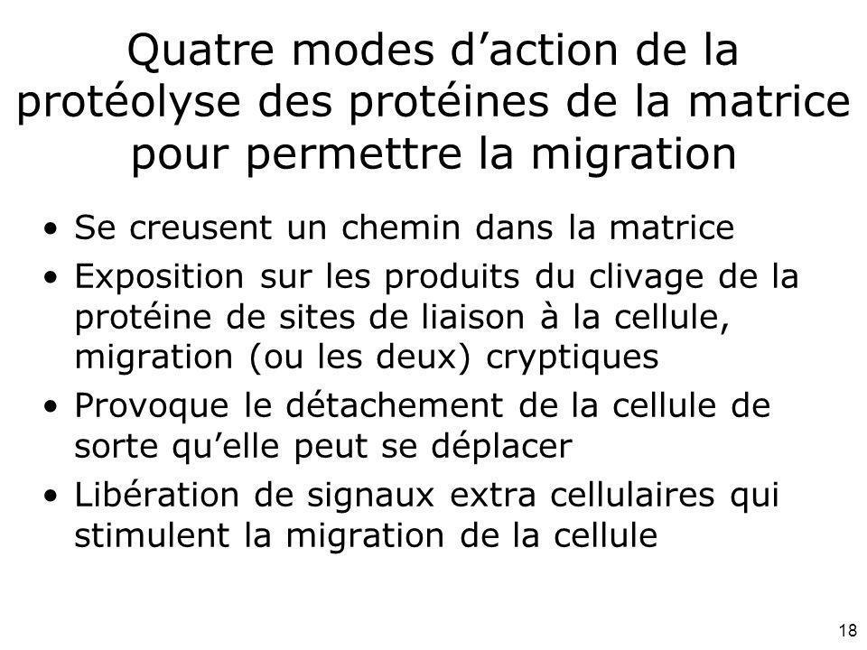 Mardi 12 février 2008 Quatre modes d'action de la protéolyse des protéines de la matrice pour permettre la migration.