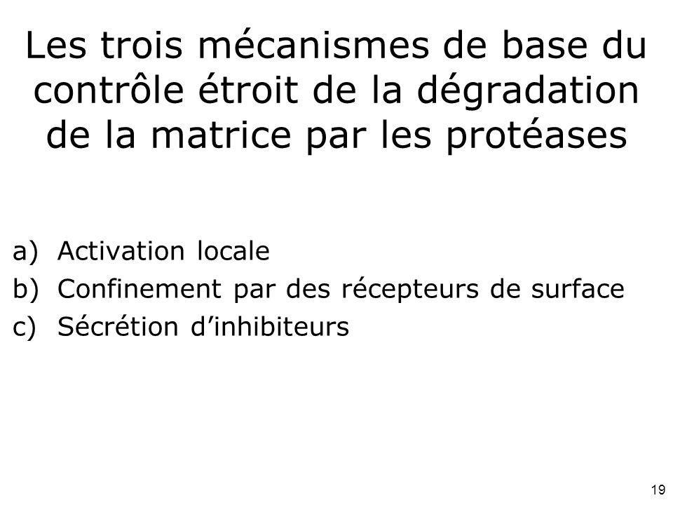Mardi 12 février 2008 Les trois mécanismes de base du contrôle étroit de la dégradation de la matrice par les protéases.
