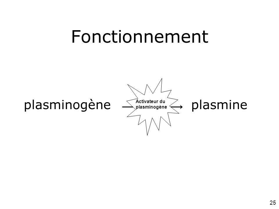 Fonctionnement plasminogène plasmine #21p1112 Mardi 12 février 2008