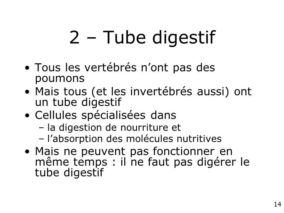 2 – Tube digestif Tous les vertébrés n'ont pas des poumons