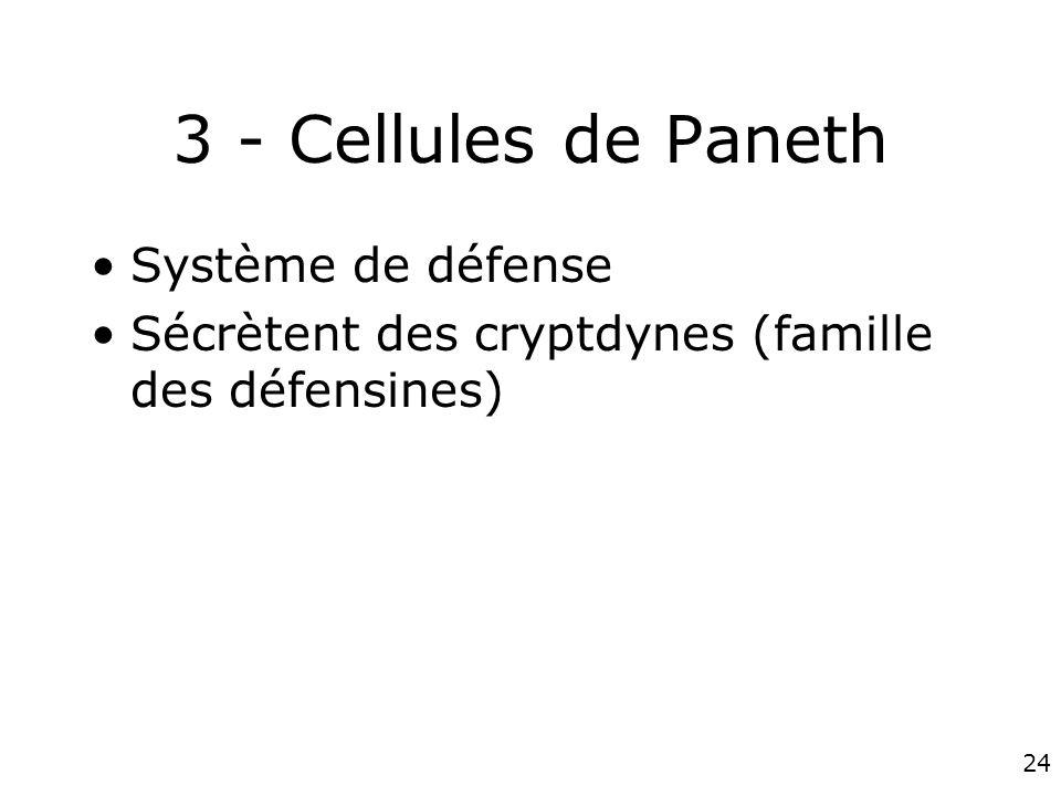 3 - Cellules de Paneth Système de défense