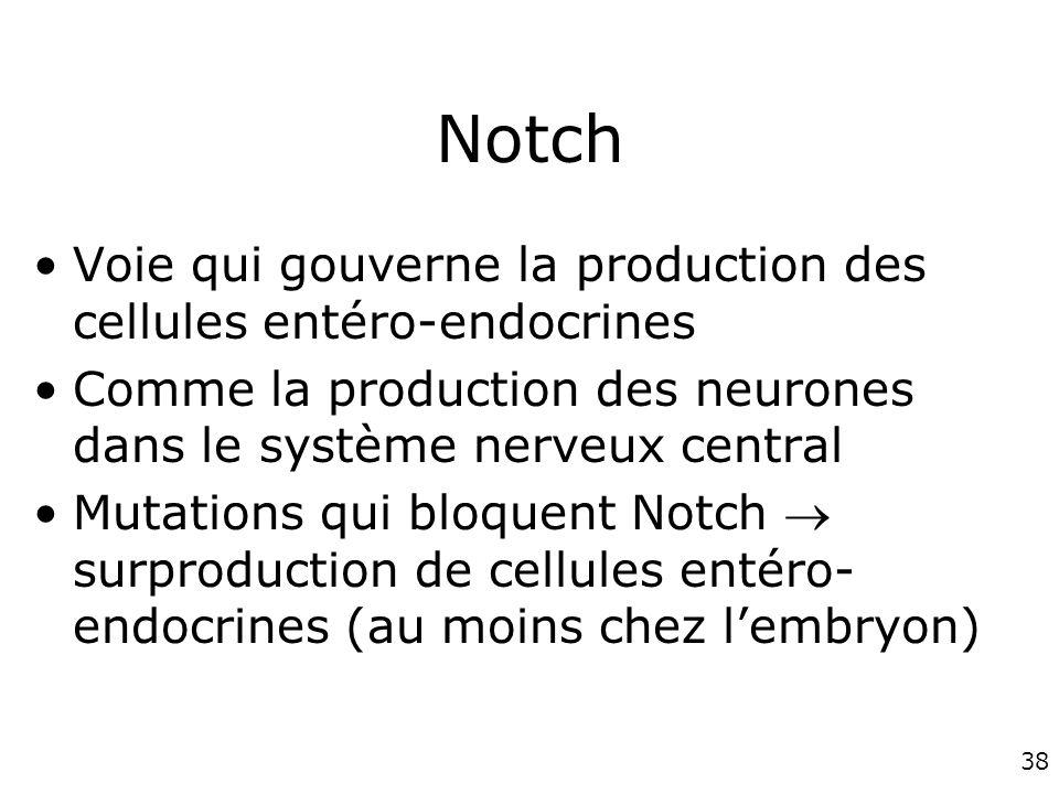 Notch Voie qui gouverne la production des cellules entéro-endocrines