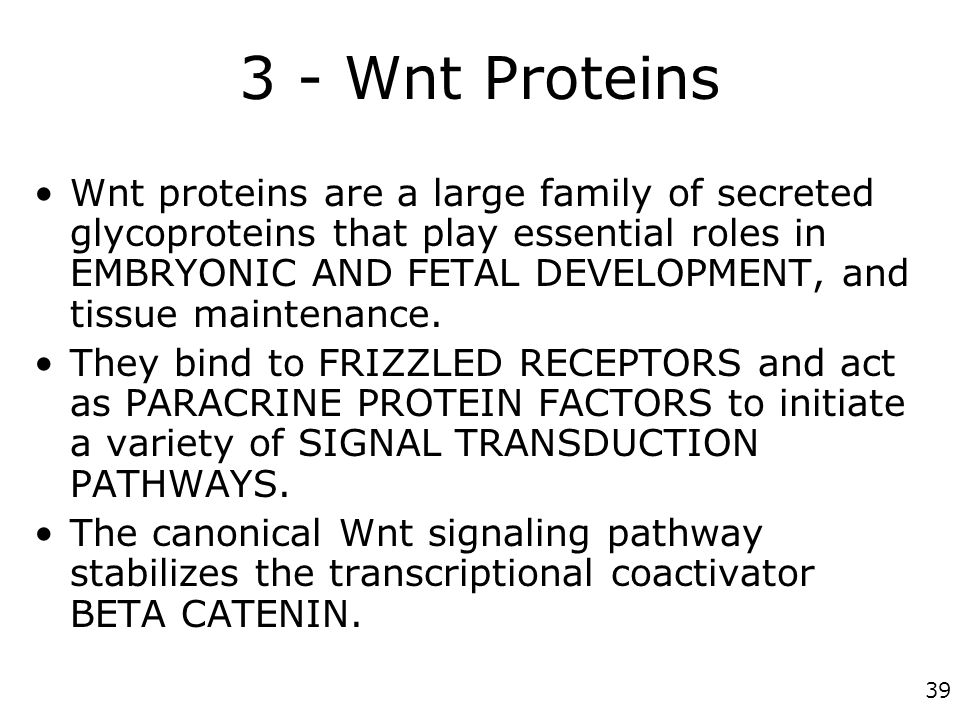 3 - Wnt Proteins