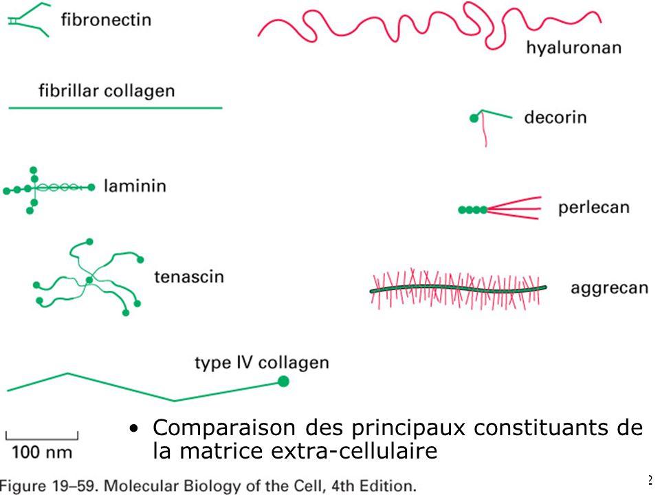 Mardi 12 février 2008 Fig 19-59. Comparaison des principaux constituants de la matrice extra-cellulaire.