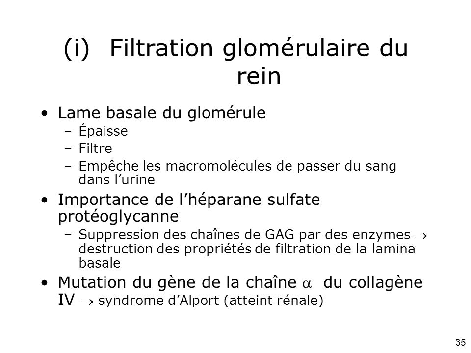 Filtration glomérulaire du rein