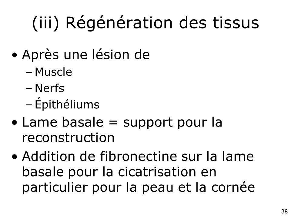 (iii) Régénération des tissus
