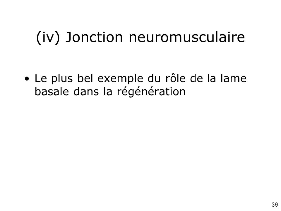 (iv) Jonction neuromusculaire
