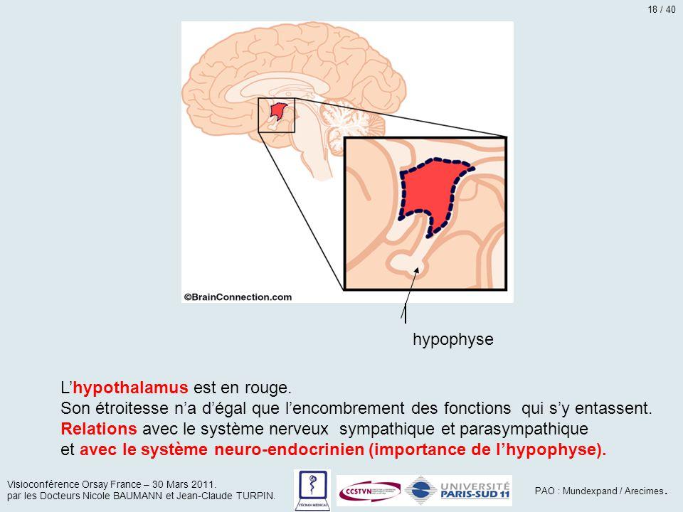 L'hypothalamus est en rouge.