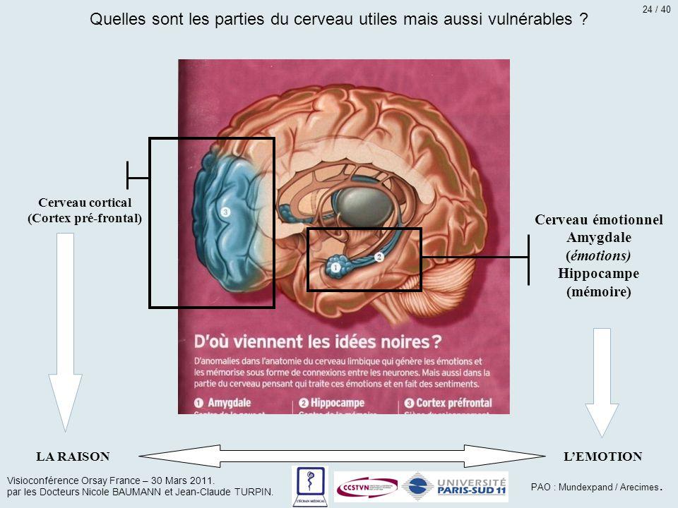 Quelles sont les parties du cerveau utiles mais aussi vulnérables