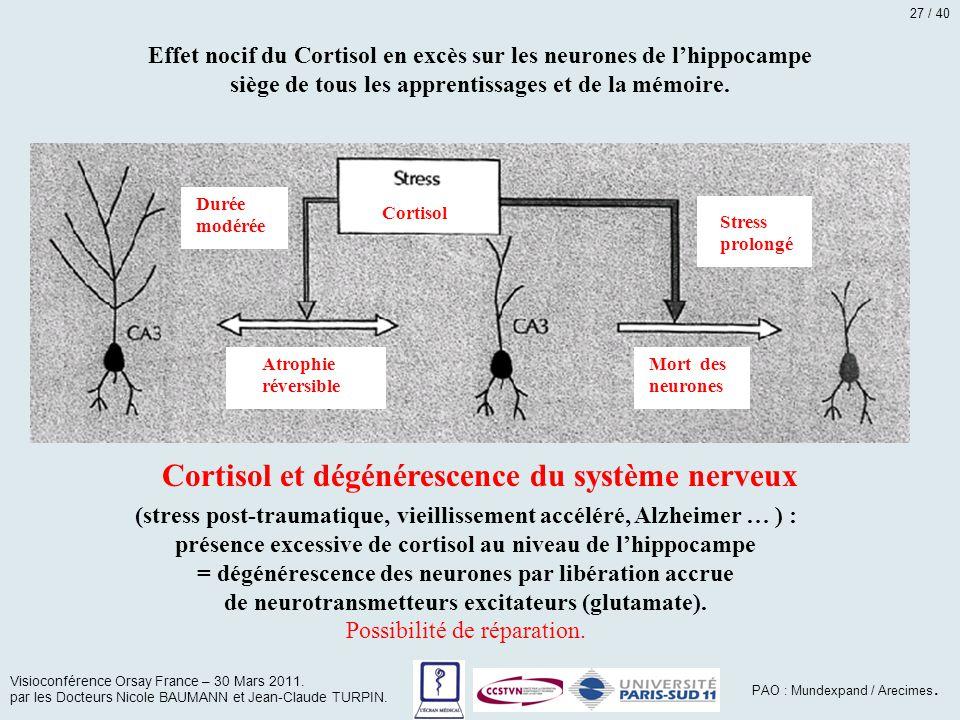 Cortisol et dégénérescence du système nerveux