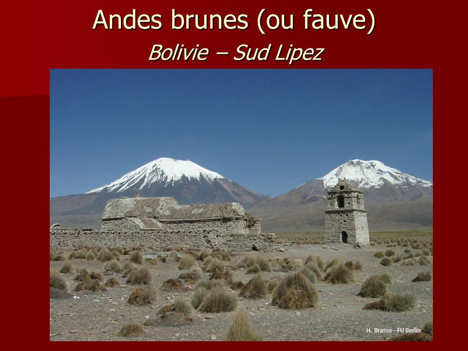 Andes brunes (ou fauve) Bolivie – Sud Lipez
