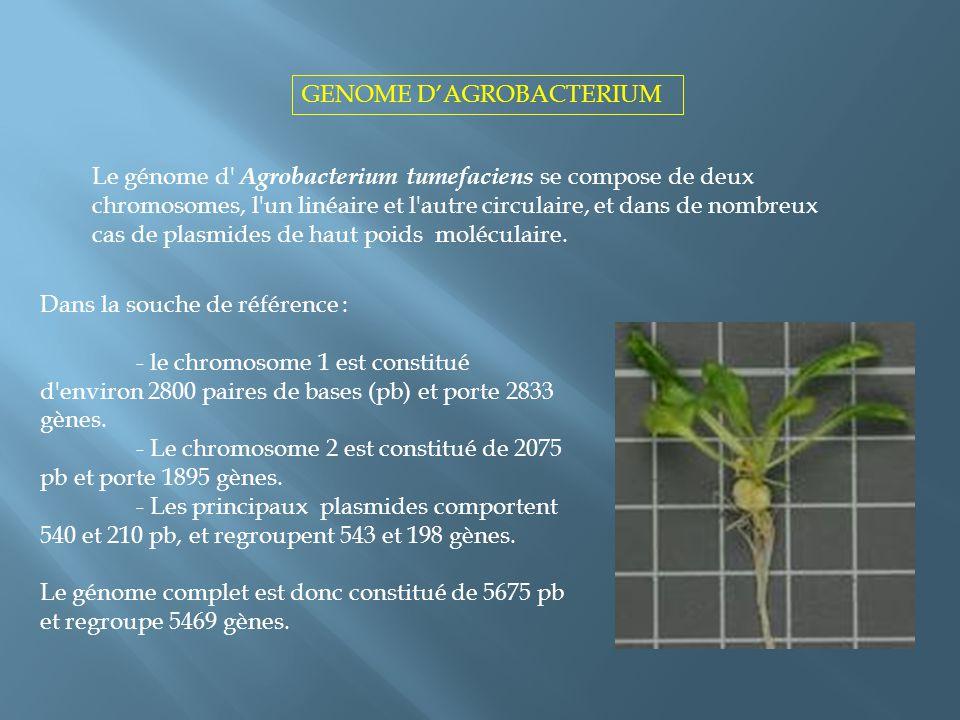 GENOME D'AGROBACTERIUM