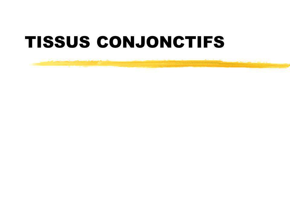 Mardi 20 février 2007 TISSUS CONJONCTIFS