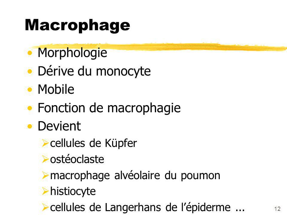 Macrophage Morphologie Dérive du monocyte Mobile