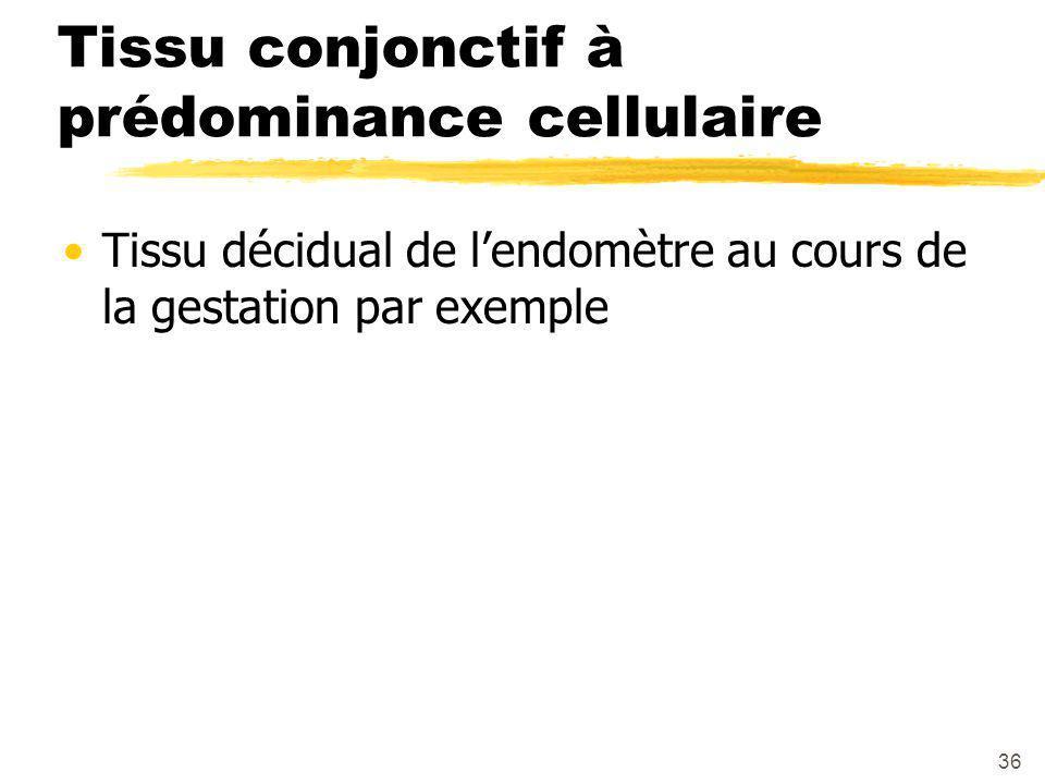 Tissu conjonctif à prédominance cellulaire