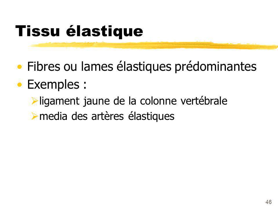 Tissu élastique Fibres ou lames élastiques prédominantes Exemples :