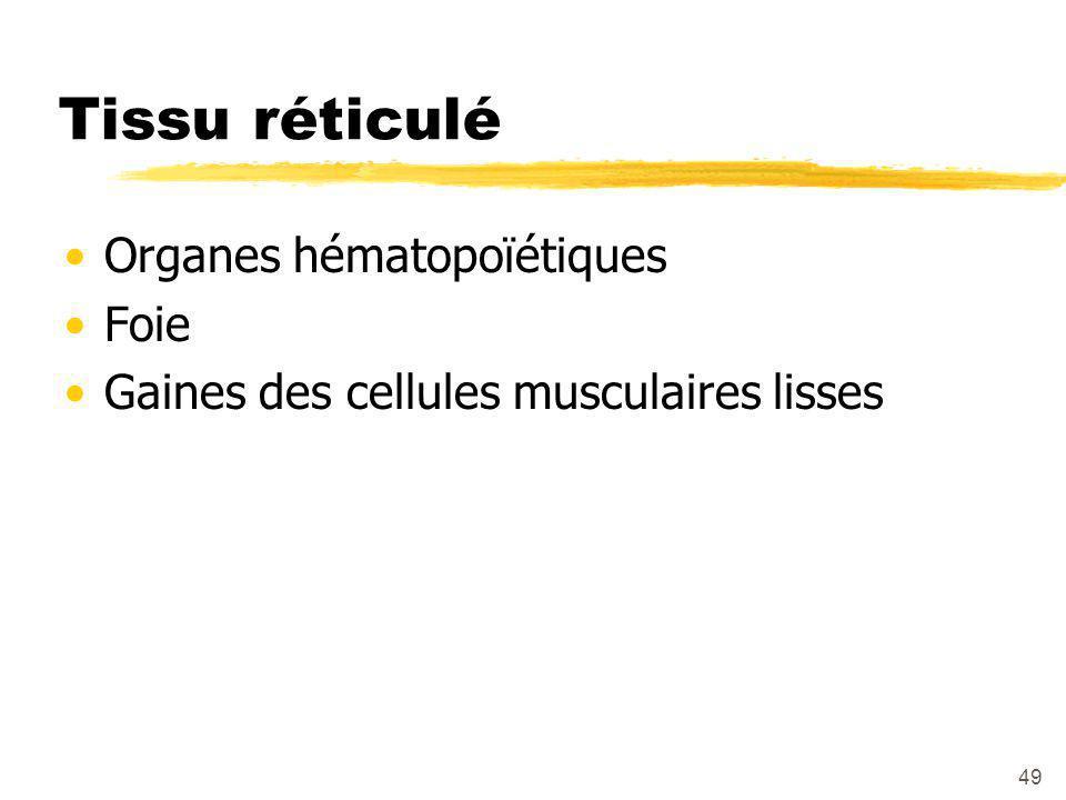 Tissu réticulé Organes hématopoïétiques Foie