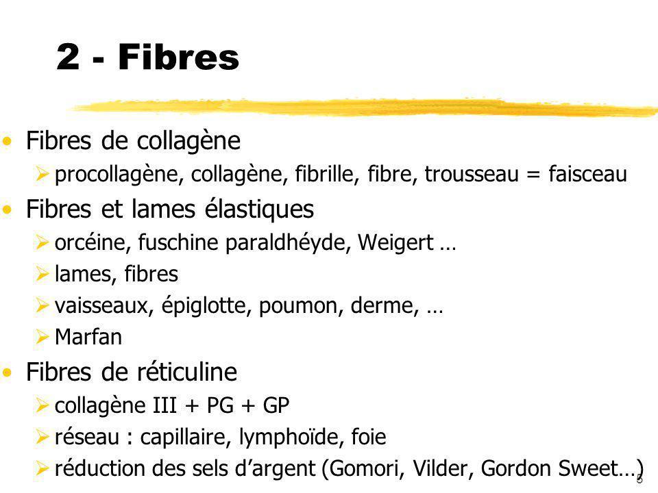 2 - Fibres Fibres de collagène Fibres et lames élastiques