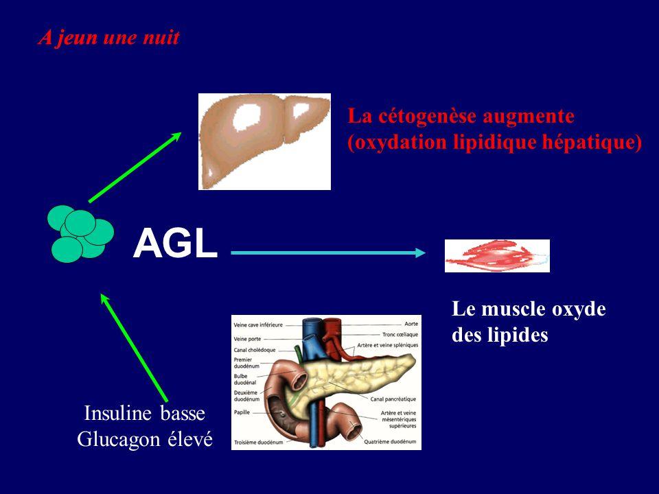 AGL A jeun une nuit A jeun La cétogenèse augmente