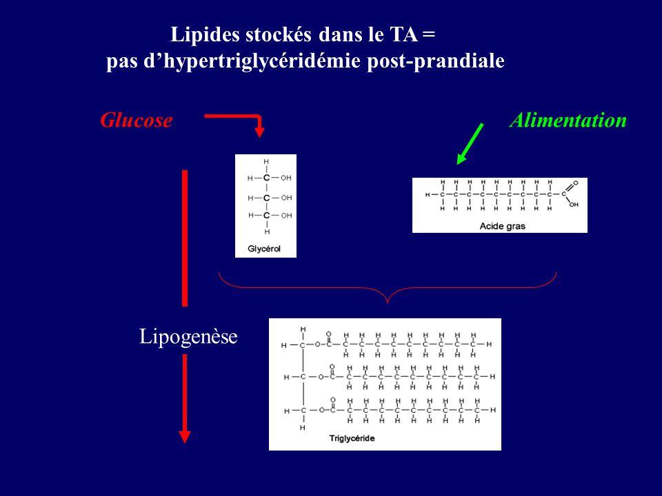 Lipides stockés dans le TA = pas d'hypertriglycéridémie post-prandiale