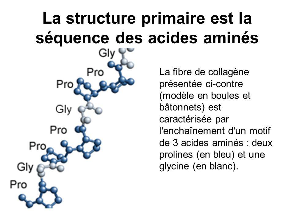 La structure primaire est la séquence des acides aminés
