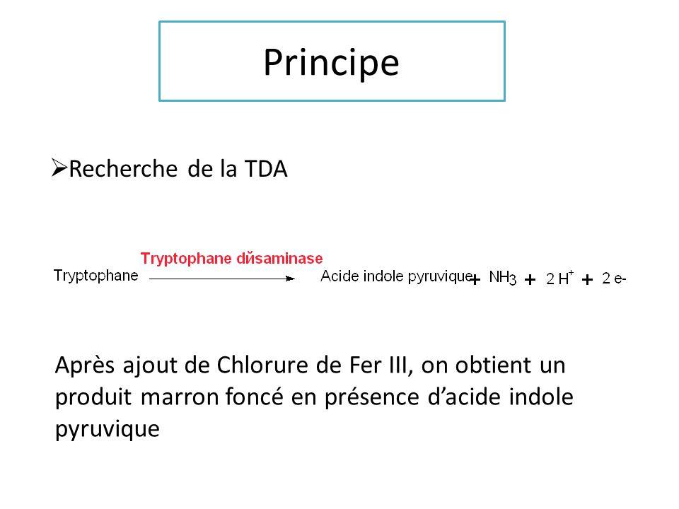 Principe Recherche de la TDA