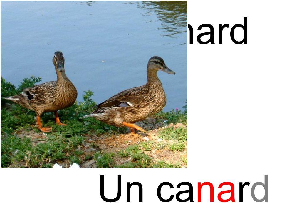 canard na Un canard