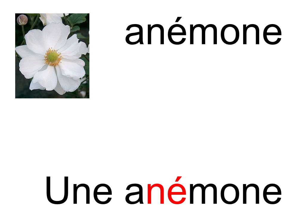 anémone né Une anémone