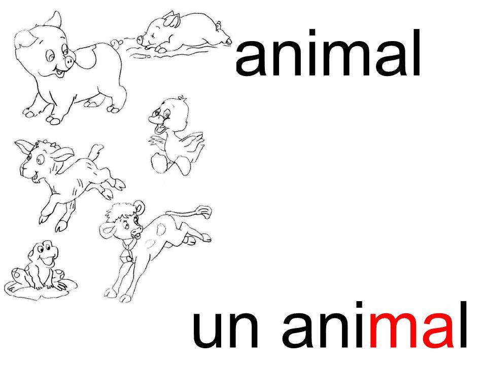 animal ma un animal