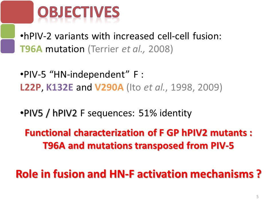 Objectives Role in fusion and HN-F activation mechanisms