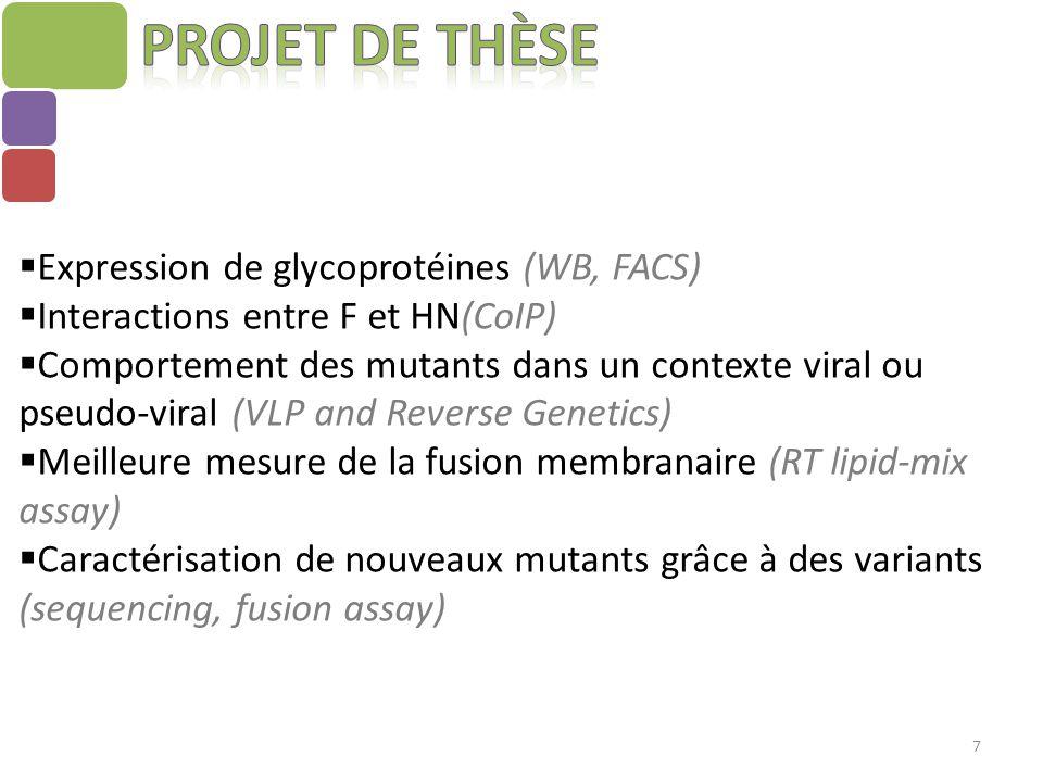 Projet de thèse Expression de glycoprotéines (WB, FACS)