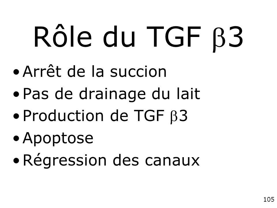 Rôle du TGF 3 Arrêt de la succion Pas de drainage du lait