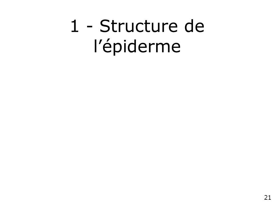 1 - Structure de l'épiderme