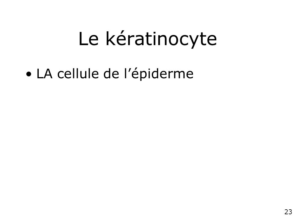 Le kératinocyte LA cellule de l'épiderme