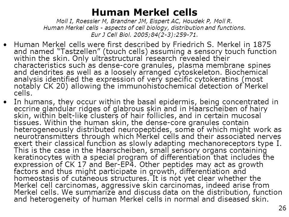 Human Merkel cells Moll I, Roessler M, Brandner JM, Eispert AC, Houdek P, Moll R. Human Merkel cells - aspects of cell biology, distribution and functions. Eur J Cell Biol. 2005;84(2-3):259-71.