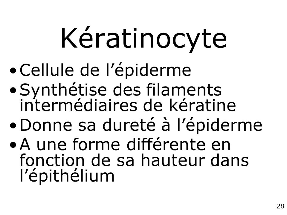 Kératinocyte Cellule de l'épiderme