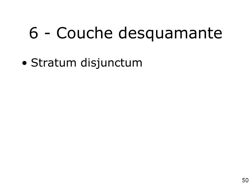 6 - Couche desquamante Stratum disjunctum #1p1261
