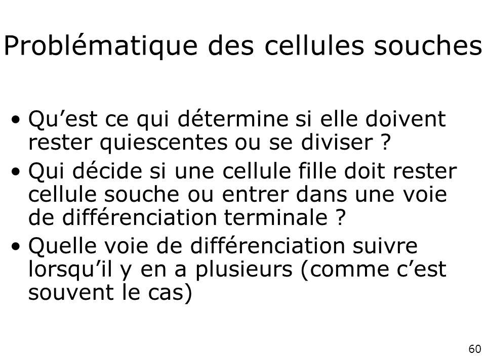 Problématique des cellules souches