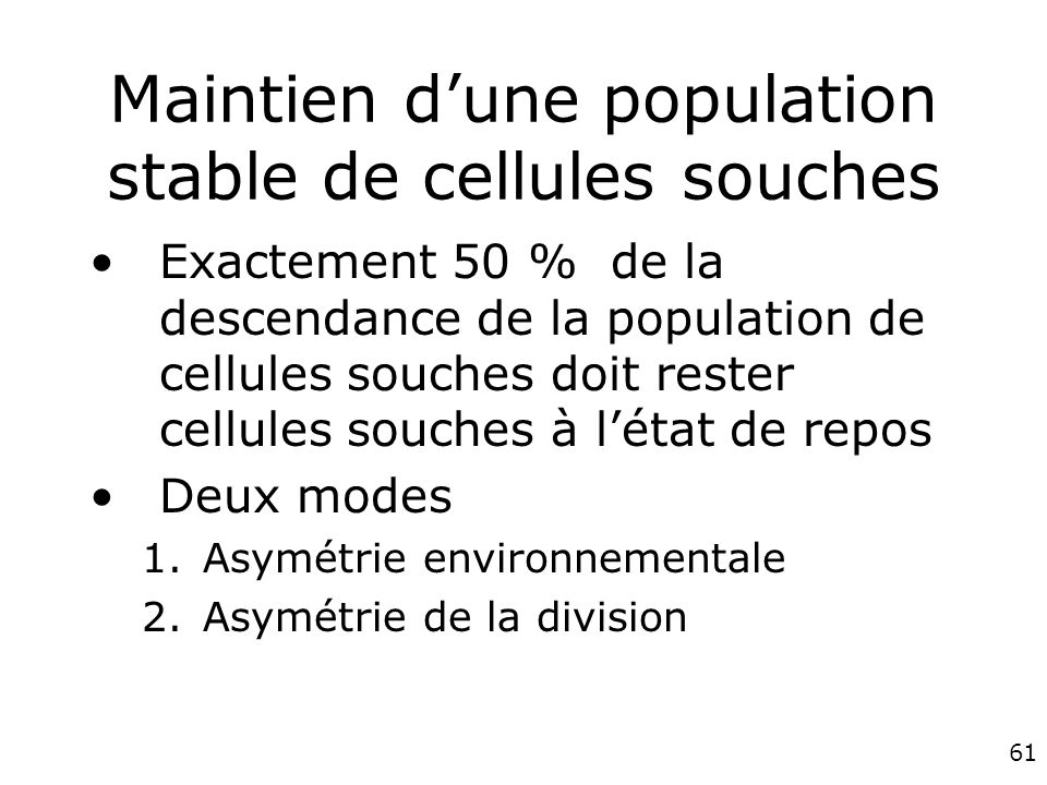 Maintien d'une population stable de cellules souches