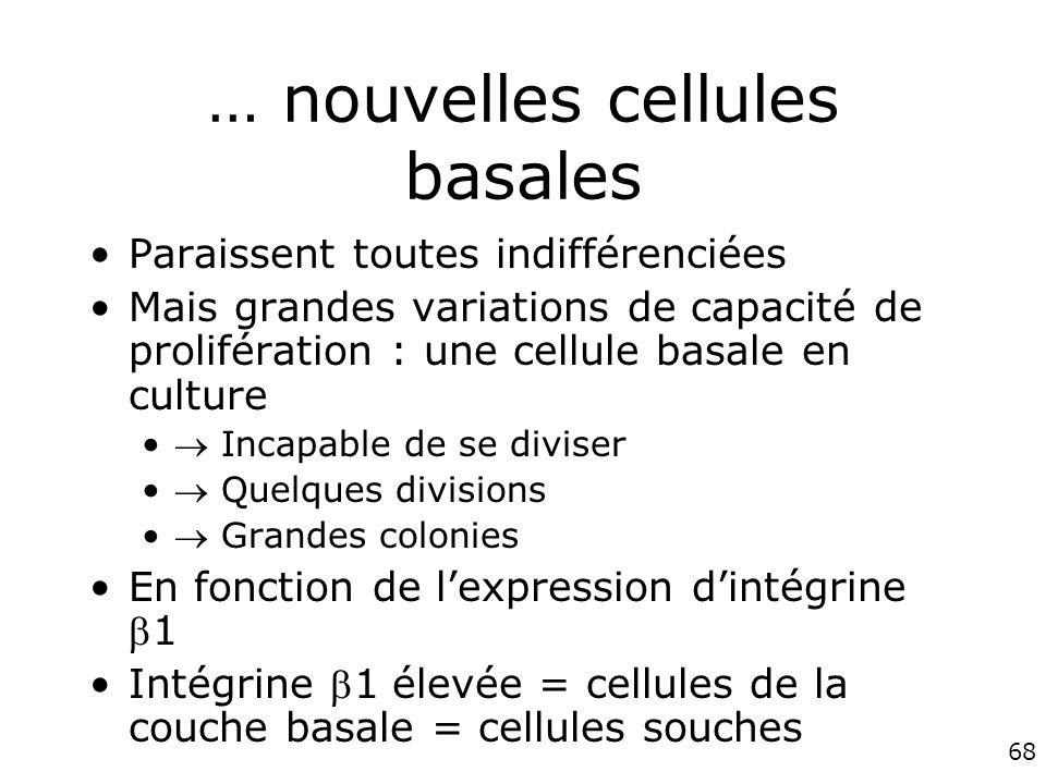 … nouvelles cellules basales