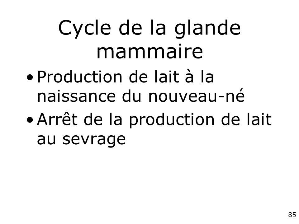 Cycle de la glande mammaire