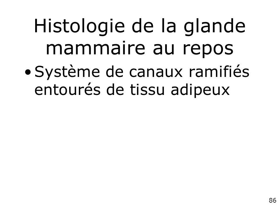 Histologie de la glande mammaire au repos
