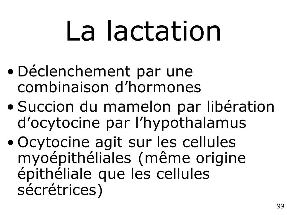 La lactation Déclenchement par une combinaison d'hormones