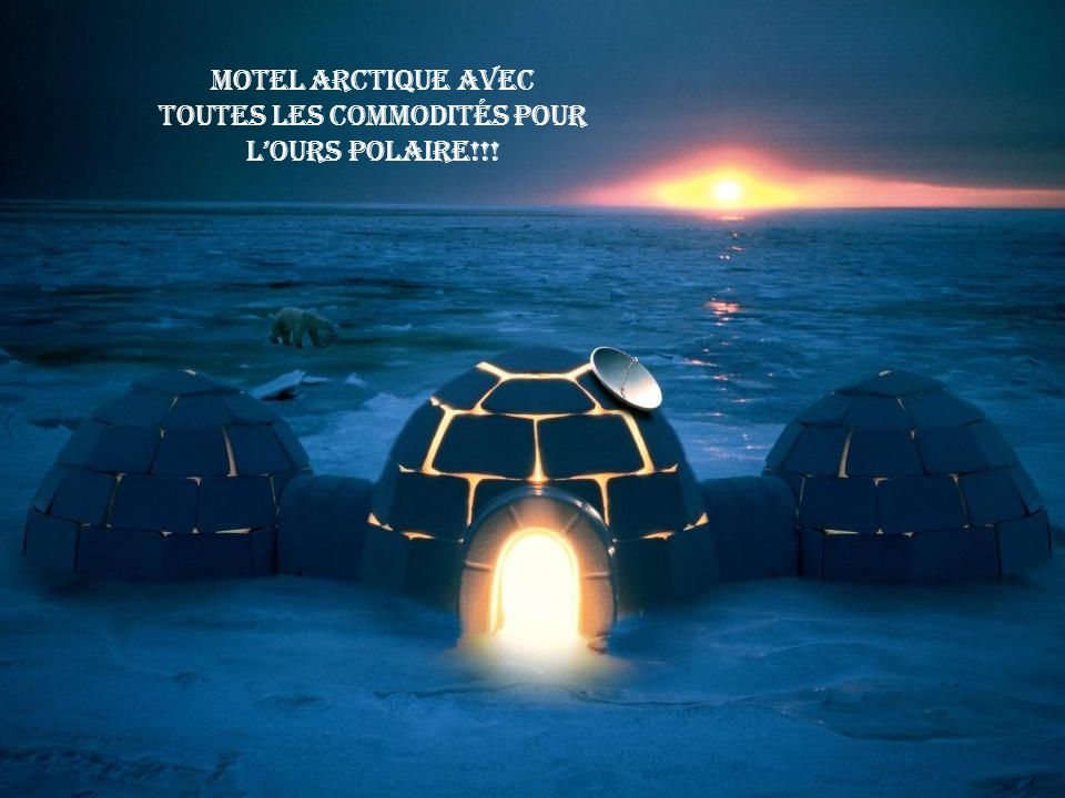 Motel arctique avec toutes les commodités pour l'ours polaire!!!