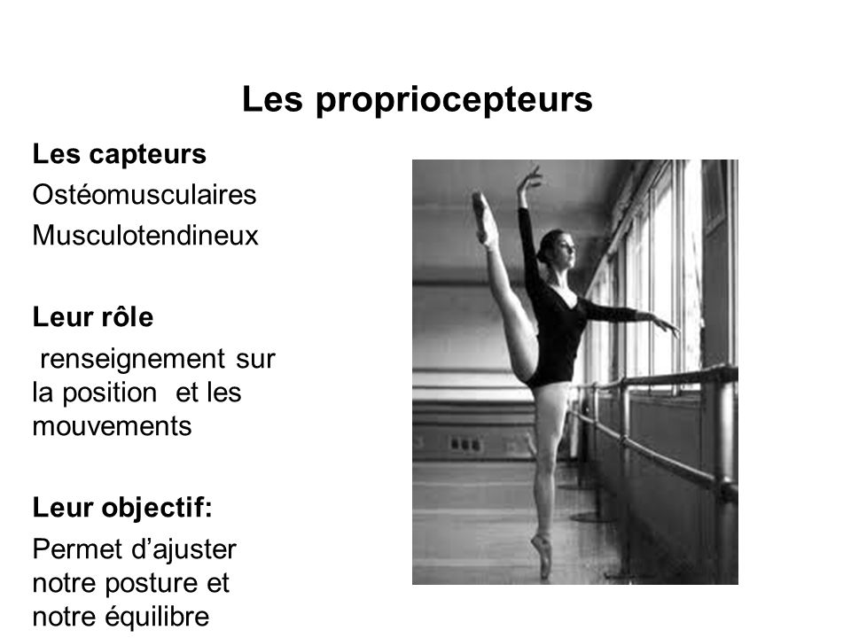 Les propriocepteurs Les capteurs Ostéomusculaires Musculotendineux