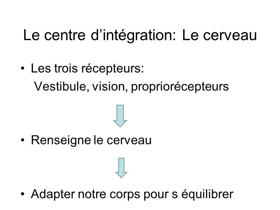 Le centre d'intégration: Le cerveau