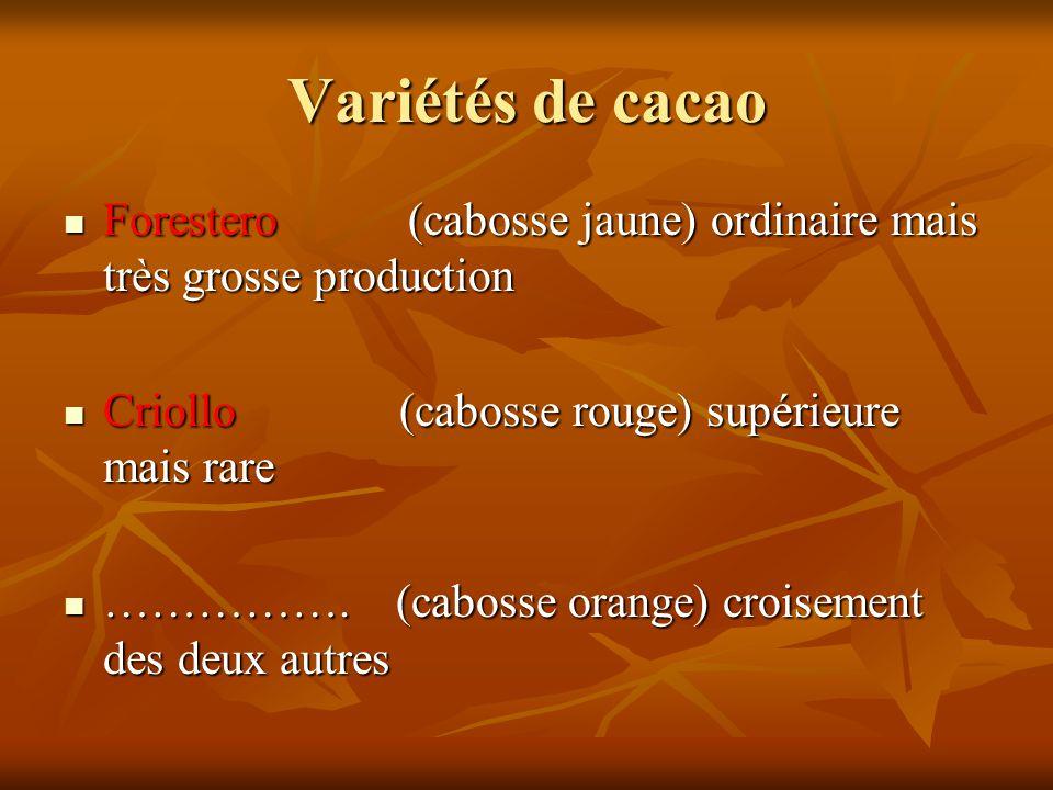 Variétés de cacao Forestero (cabosse jaune) ordinaire mais très grosse production.