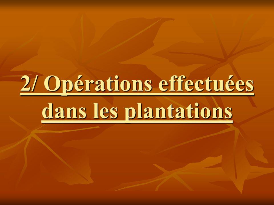 2/ Opérations effectuées dans les plantations