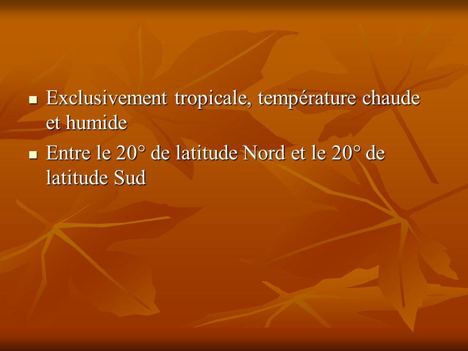 Exclusivement tropicale, température chaude et humide