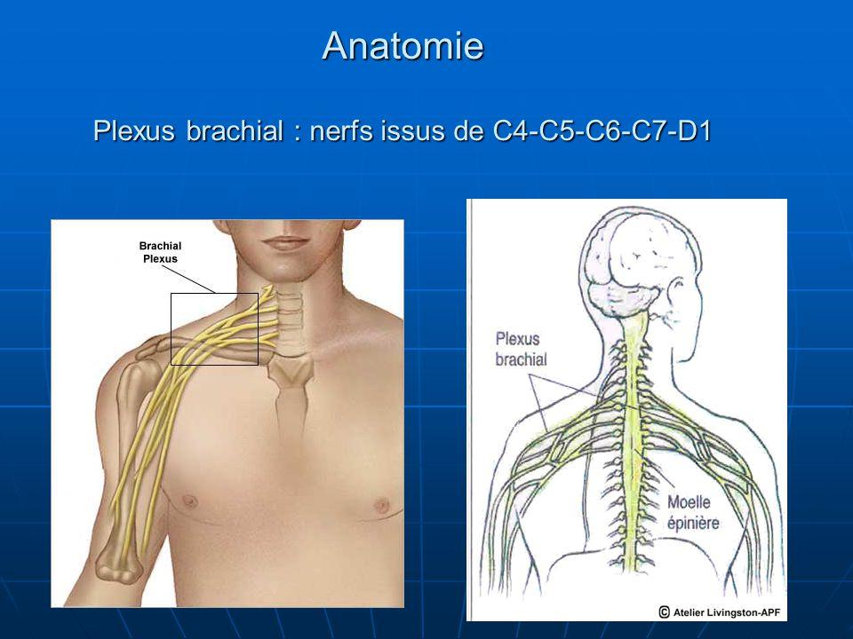 Anatomie Plexus brachial : nerfs issus de C4-C5-C6-C7-D1